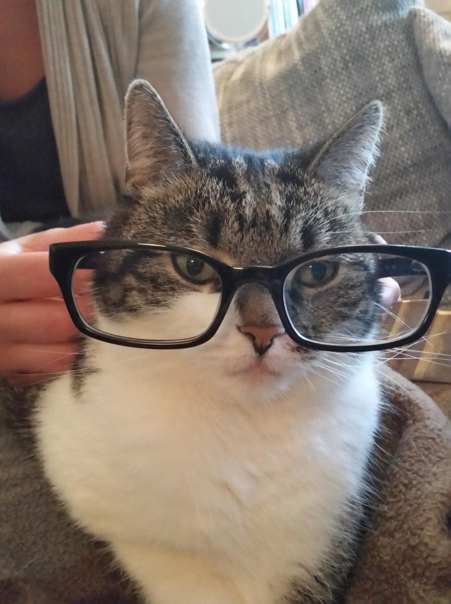 """""""Leben"""" trotz Katze - Morgenstund' tut Wahrheit kund"""