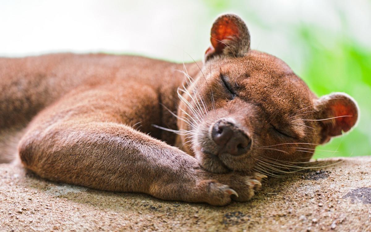 Von Tieren, Menschen und Verantwortung I