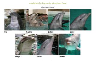 Delfin_Medizin