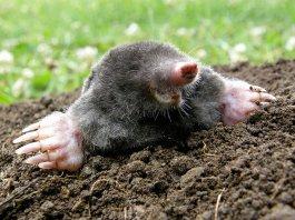 Plagiiert von www.tierchenwelt.de
