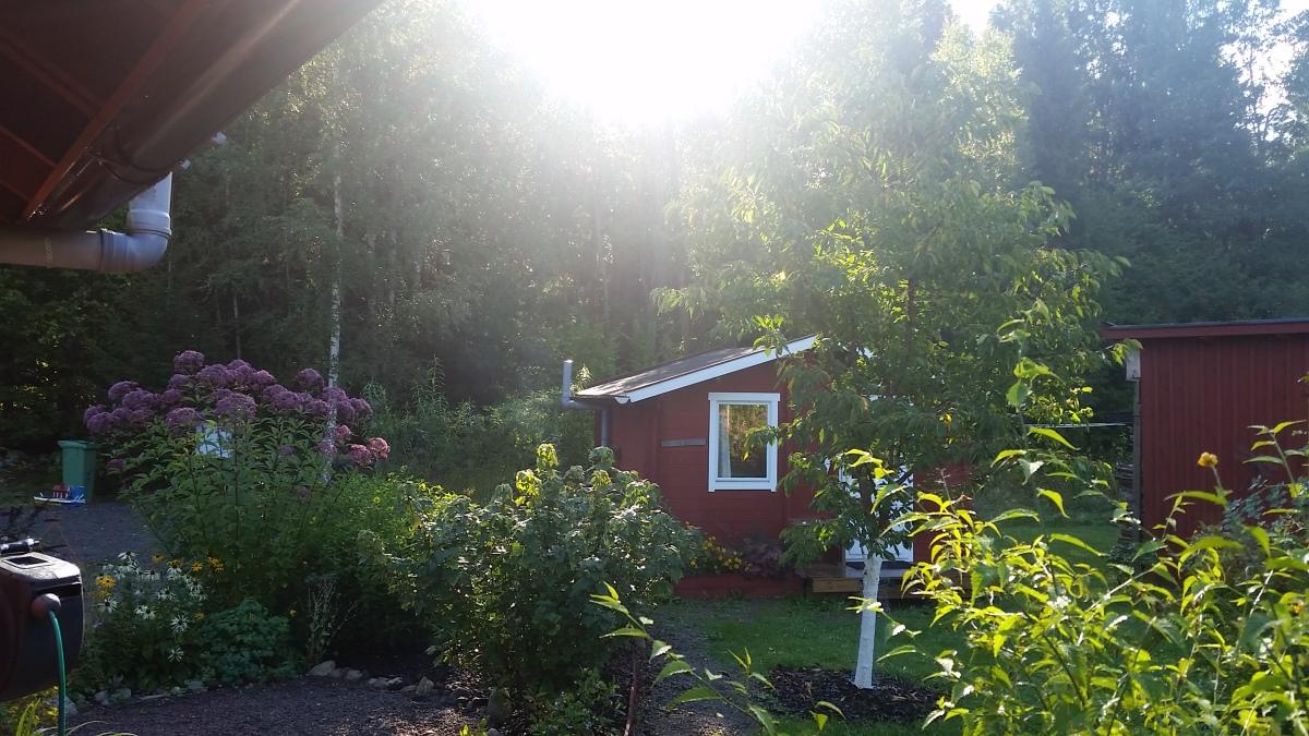 Zitronen in Schweden - Urlaub I